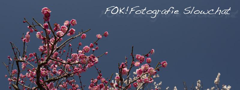 FFSC01.jpg